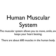 Animals: Human Muscular System
