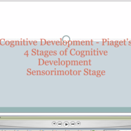 Piaget 39 s 4 stages of cognitive development sensorimotor for 4 stages of motor development