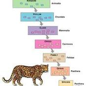 Unit 2 Taxonomy & Classification