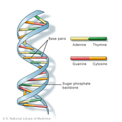 AP Information - Genetics and Central Dogma
