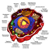 Cells and Body Systems