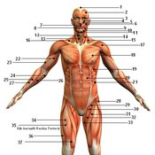Body Systems (5th Six-weeks Test #1)