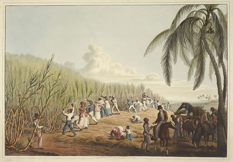 The gang system of labor was prevalent in slave societies throughout the Atlantic World. For example, the above image from 1823 (originally published in William Clark's
