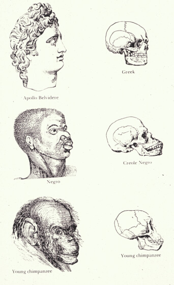 """This 1857 illustration from a book, titled Indigenous Races of the Earth, indicates that the """"Negro"""" occupied a place between the Greeks and chimpanzees and makes this distinction based on a skull diagram."""