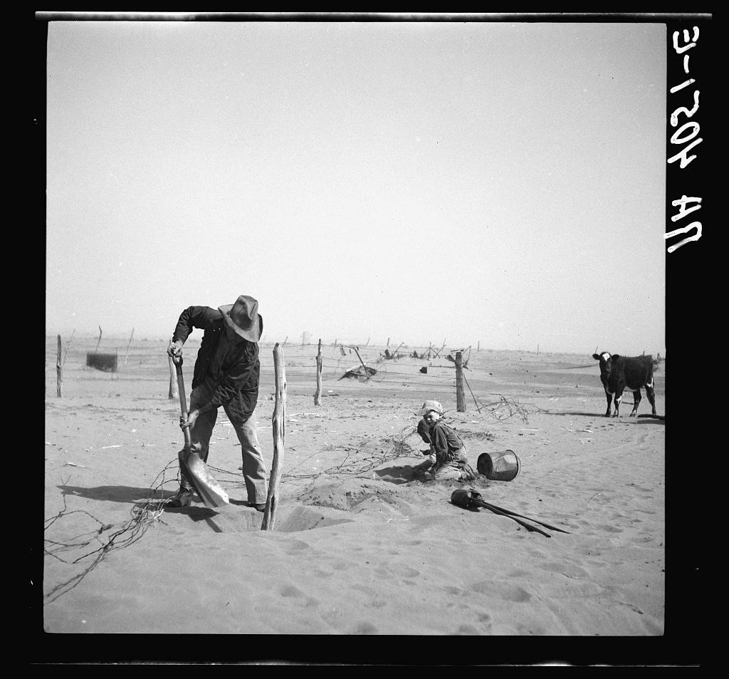 Farmer from Cimarron County, Oklahoma, rebuilding his fence to prevent it from being buried by sand.  Photograph by Arthur Rothstein, April 1936.