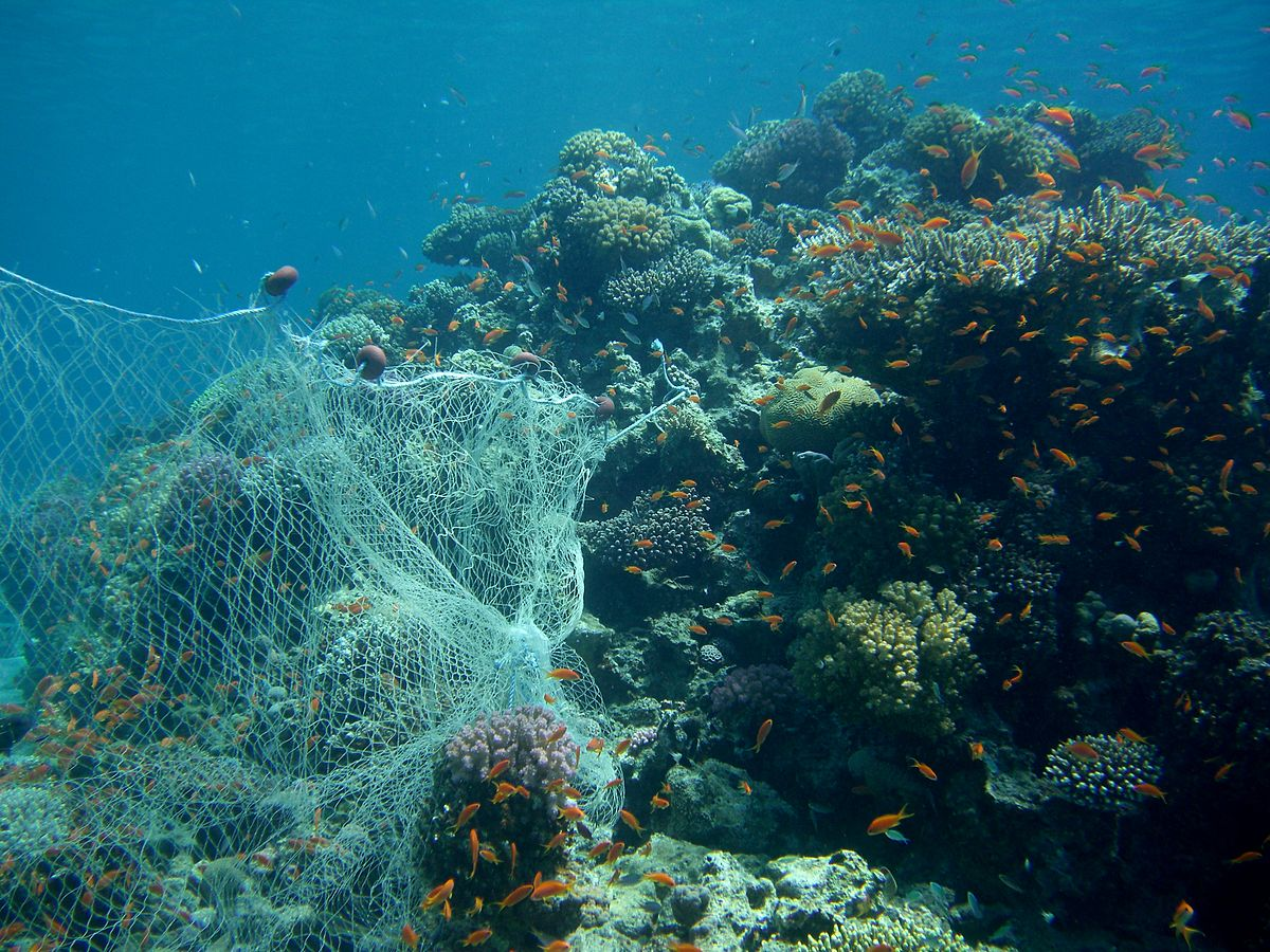 Fishing Net on a Coral Reef