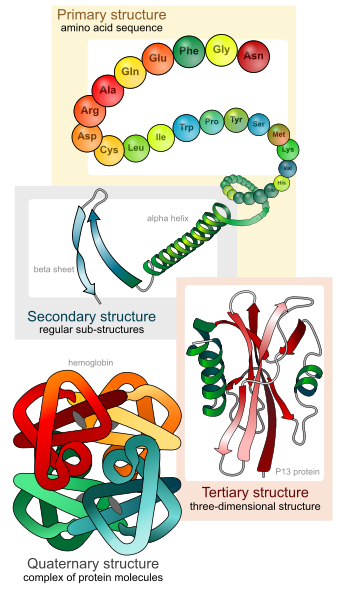 File:7232-Protein_Structure.png