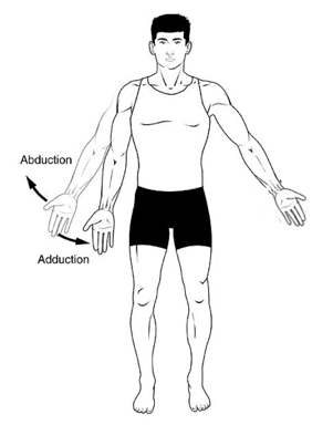 File:7280-AbductionAdduction.png