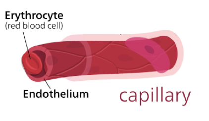 File:7339-Capillary.png