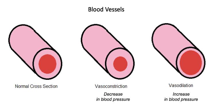 File:7348-VasodilationVasoconstriction.png