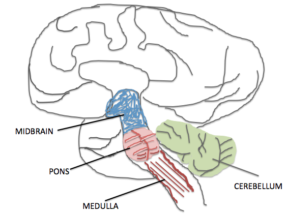 File:7477-brain_overview.png