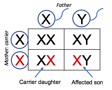 File:7555-Carrier_Mother.png
