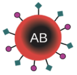 Red Blood Cell Type AB
