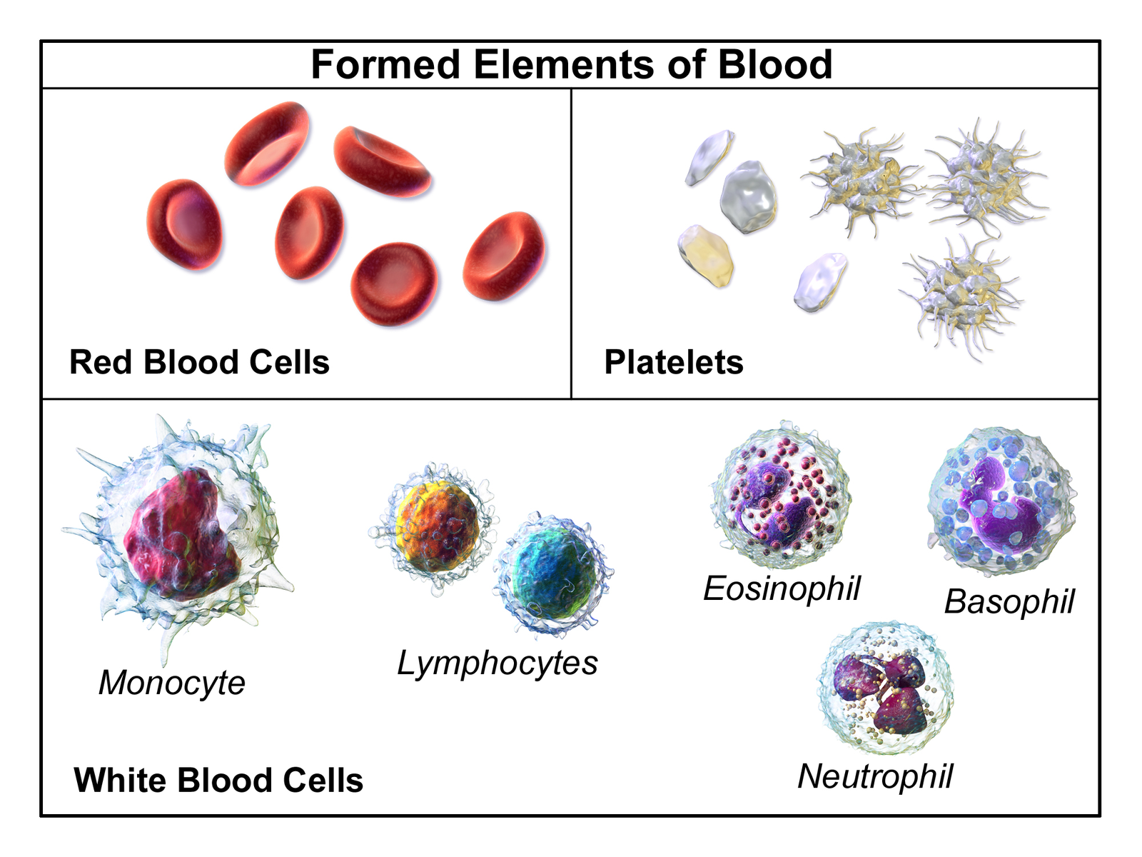 Blood Components