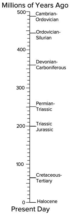 Mass Extinction Timeline