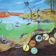Ecosystem and Community Ecology