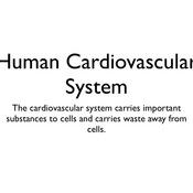 Animals: Human Cardiovascular System