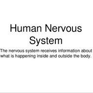 Animals: Human Nervous System