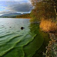 Plant Kingdom: Algae
