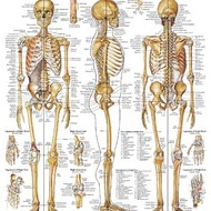 Chapter 6 Skeletal System: Bones and Joints