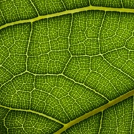 Unit 4: Plant/Leaf Anatomy