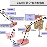 Unit 3: Multicellular Organization