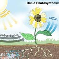 7.5A Photosynthesis