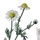 Wildflowers in Hungary 1 (EFL)