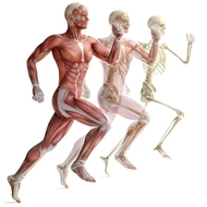 Unit 11: Skeletal and Muscular System