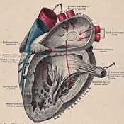 Unit 11: Circulatory System