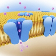 Chapter 3: Movement Through the Cell Membrane