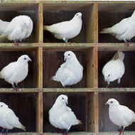 Combinatorics Principles: Pigeonhole Principle