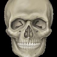 Chapter 6: Bones of the Skull