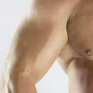 Animals: Human Muscular System