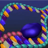 RNA and Transcription