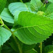 Plant Kingdom: Photosynthesis