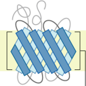 Plasme Membrane Proteins