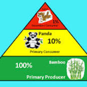 Ecological Pyramids and the 10% rule (3.2 part 2)