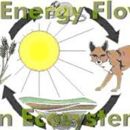 Energy in Ecosystems Food Webs
