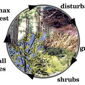 Ecological Succession (4.2 part 2)
