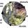 Ecological Succession (4.2 part 2)