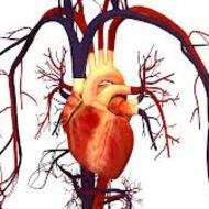 Circulatory System-Cole