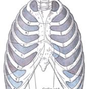 Mechanics of Ventilation (respiratory system)