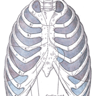 Mechanics of Ventilation (respiratory system)