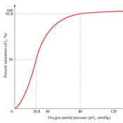 Gas Transport: Carbon Dioxide & Oxygen
