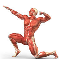The Muscular System: Unit 5