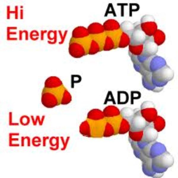 ATP (8.1)