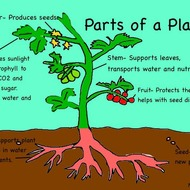 Plant Life Cycle-3.L.2.1