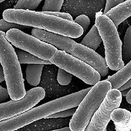Microbes: Bacteria