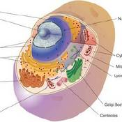 Cells: The Structural and Functional Units of Life